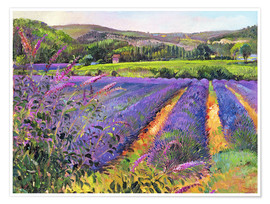 Póster  Lavender field - Timothy Easton