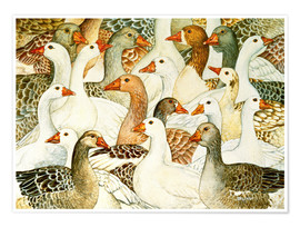 Póster  Patchwork Geese - Ditz