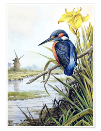 Póster  Kingfisher with Flag Iris and Windmill - Carl Donner