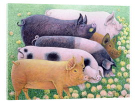 Metacrilato  Pigs - Pat Scott