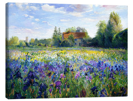 Lienzo  Field of flowers in the sunset - Timothy Easton