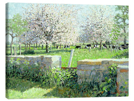 Lienzo  Cows in the Orchard - Lucy Willis
