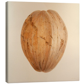 Lienzo  Coconut from Sri Lanka - Lincoln Seligman