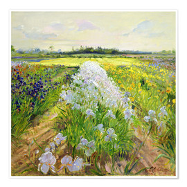 Póster  flower field - Timothy Easton