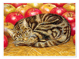 Póster Cat and Apples