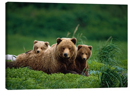 Lienzo  Oso Grizzly con cachorros - Jo Overholt