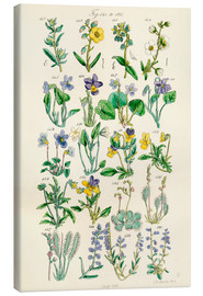 Lienzo  Wildflowers - Ken Welsh