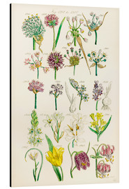 Ken Welsh - Wildflowers, Sowerby 1281-1300