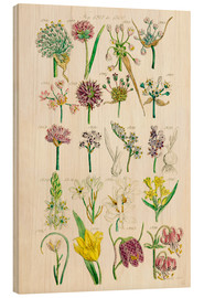 Madera  Wildflowers, Sowerby 1281-1300 - Ken Welsh