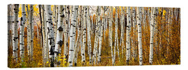 Lienzo  Aspens in autumn - Ron Dahlquist
