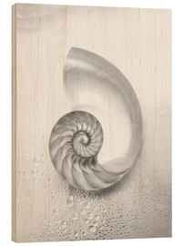 Madera  Nautilus shell - Kate & Tom Turning & Gibson