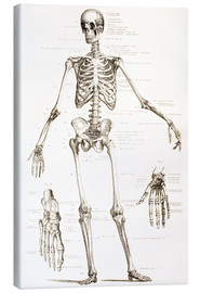 Lienzo  The Human Skeleton - Ken Welsh