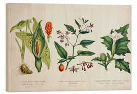 Cuadro de madera  Common Poisonous Plants - Wunderkammer Collection