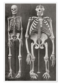 Póster  Skeletons Of Man and Gorilla - Ken Welsh