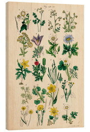 Cuadro de madera  Wildflowers - Sowerby Collection