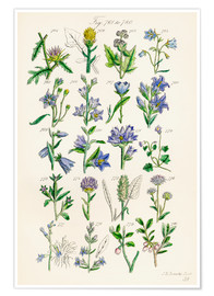 Póster  Wildflowers, Sowerby - Ken Welsh