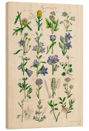 Madera  Wildflowers, Sowerby - Ken Welsh