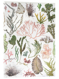 Cuadro de metacrilato  Water plants - Wunderkammer Collection