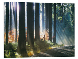 Cuadro de PVC  Morning Light in the Forrest - Martina Cross