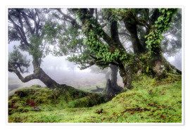 Póster  Fog within the Laurel forest, Madeira, Portugal - Circumnavigation