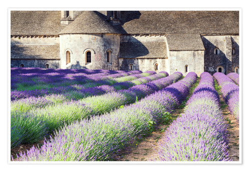 Póster Famous Senanque abbey with its lavender field, Provence, France