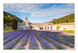 Póster  Famous Senanque abbey with lavender field, Provence, France - Matteo Colombo