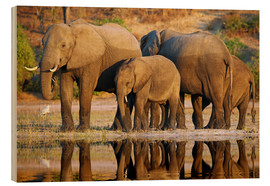 Cuadro de madera  Elephants at a river, Africa wildlife - wiw