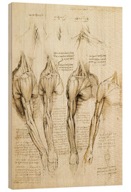 Madera  Muscles of shoulder, arm and neck - Leonardo da Vinci