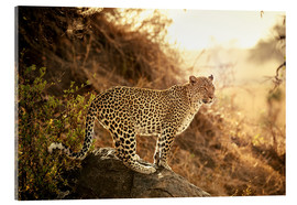 Cuadro de metacrilato  female Leopard at sunset - Jürgen Ritterbach