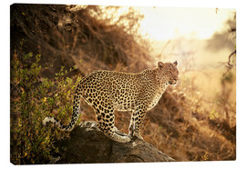 Lienzo  female Leopard at sunset - Jürgen Ritterbach