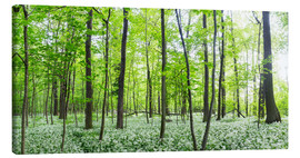 Lienzo  A forest in springtime with wild garlic - Benjamin Butschell