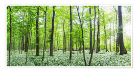 Póster  A forest in springtime with wild garlic - Benjamin Butschell