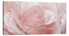 Lienzo  Rose with drops - Atteloi