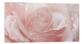 Forex  Rose with drops - Atteloi