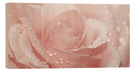 Cuadro de madera  Rose with drops - Atteloi