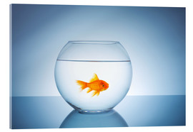 Cuadro de metacrilato  Fishbowl with goldfish - rclassen