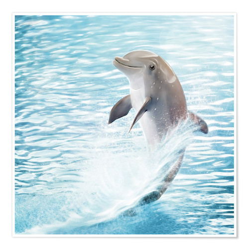 Póster dolphin