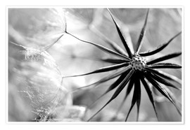 Póster Dandelion  near to you