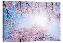 Lienzo  pink cherry blossom in spring with backlight and blue sky - Jan Christopher Becke