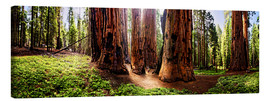 Lienzo  Sequoia giant, panoramic - Michael Rucker