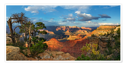Póster Grand Canyon with knotty pine