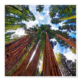 Póster giant Sequoia