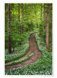 Póster Path through Forest full of Wild Garlic