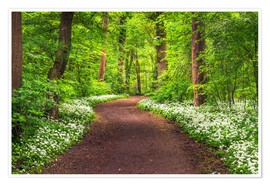 Póster Path through Forest full of Wild Garlic during Spring