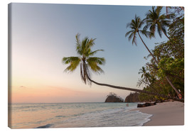 Lienzo  Palm tree and exotic sandy beach at sunset, Costa Rica - Matteo Colombo