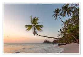 Póster Palm tree and exotic sandy beach at sunset, Costa Rica