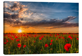 Lienzo  Field of Poppies - Bavaria - Achim Thomae
