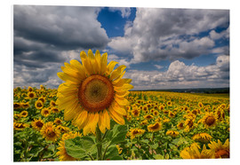 Cuadro de PVC  King of Sunflowers - Achim Thomae