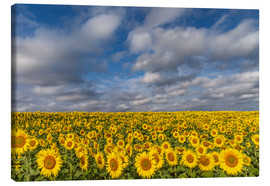 Lienzo  Sea of Sunflowers - Achim Thomae