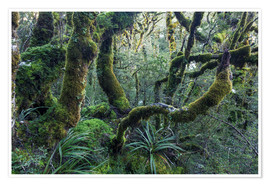 Póster Mossy rainforest of Routeburn track, New Zealand